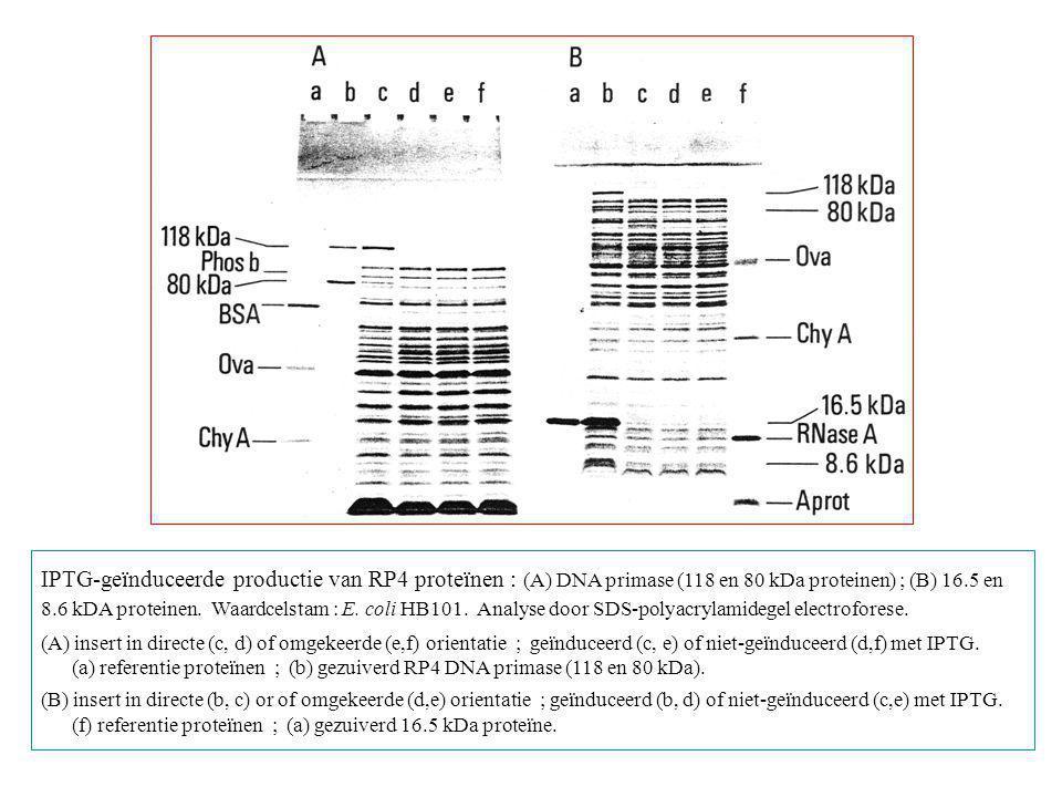 IPTG-geïnduceerde productie van RP4 proteïnen : (A) DNA primase (118 en 80 kDa proteinen) ; (B) 16.5 en 8.6 kDA proteinen. Waardcelstam : E. coli HB10