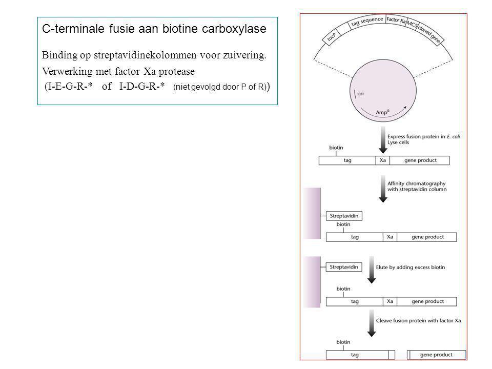 C-terminale fusie aan biotine carboxylase Binding op streptavidinekolommen voor zuivering. Verwerking met factor Xa protease (I-E-G-R-* of I-D-G-R-* (