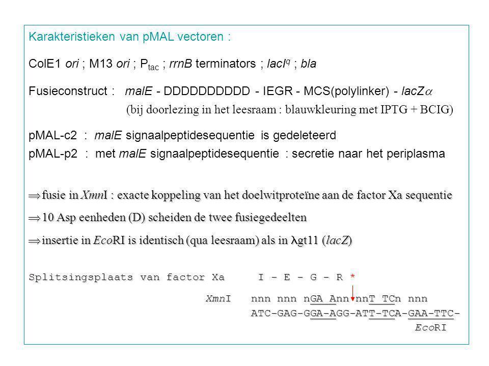 Karakteristieken van pMAL vectoren : ColE1 ori ; M13 ori ; P tac ; rrnB terminators ; lacI q ; bla Fusieconstruct : malE - DDDDDDDDDD - IEGR - MCS(polylinker) - lacZ  (bij doorlezing in het leesraam : blauwkleuring met IPTG + BCIG) pMAL-c2 : malE signaalpeptidesequentie is gedeleteerd pMAL-p2 : met malE signaalpeptidesequentie : secretie naar het periplasma  fusie in XmnI : exacte koppeling van het doelwitproteïne aan de factor Xa sequentie  10 Asp eenheden (D) scheiden de twee fusiegedeelten  insertie in EcoRI is identisch (qua leesraam) als in gt11 (lacZ) Splitsingsplaats van factor Xa I - E - G - R * XmnI nnn nnn nGA Ann nnT TCn nnn XmnI nnn nnn nGA Ann nnT TCn nnn ATC-GAG-GGA-AGG-ATT-TCA-GAA-TTC- ATC-GAG-GGA-AGG-ATT-TCA-GAA-TTC- EcoRI EcoRI