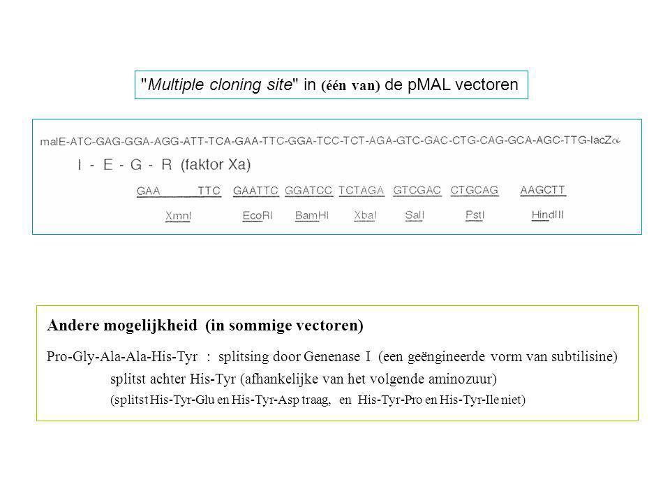 Multiple cloning site in (één van) de pMAL vectoren Andere mogelijkheid (in sommige vectoren) Pro-Gly-Ala-Ala-His-Tyr : splitsing door Genenase I (een geëngineerde vorm van subtilisine) splitst achter His-Tyr (afhankelijke van het volgende aminozuur) (splitst His-Tyr-Glu en His-Tyr-Asp traag, en His-Tyr-Pro en His-Tyr-Ile niet)