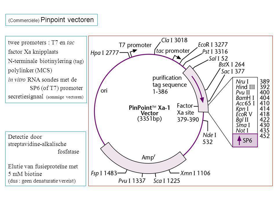 (Commerciële) Pinpoint vectoren twee promoters : T7 en tac factor Xa knipplaats N-terminale biotinylering (tag) polylinker (MCS) in vitro RNA sondes met de SP6 (of T7) promoter secretiesignaal (sommige vectoren) Detectie door streptavidine-alkalische fosfatase Elutie van fusieproteïne met 5 mM biotine (dus : geen denaturatie vereist)