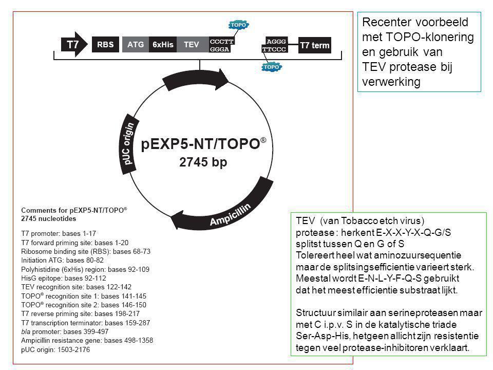 TEV (van Tobacco etch virus) protease : herkent E-X-X-Y-X-Q-G/S splitst tussen Q en G of S Tolereert heel wat aminozuursequentie maar de splitsingseff