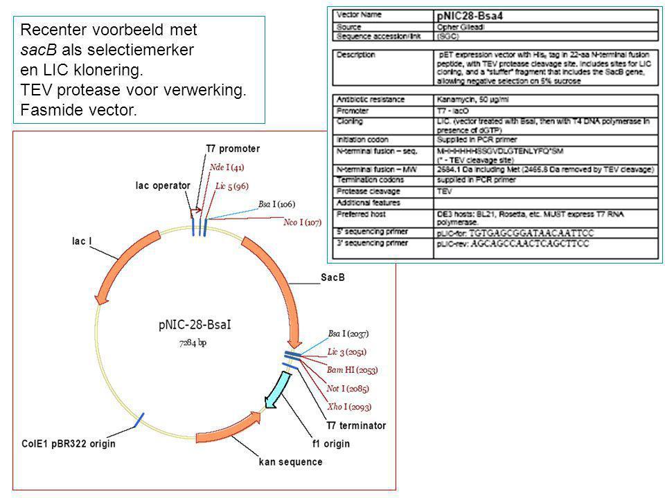 Recenter voorbeeld met sacB als selectiemerker en LIC klonering. TEV protease voor verwerking. Fasmide vector.