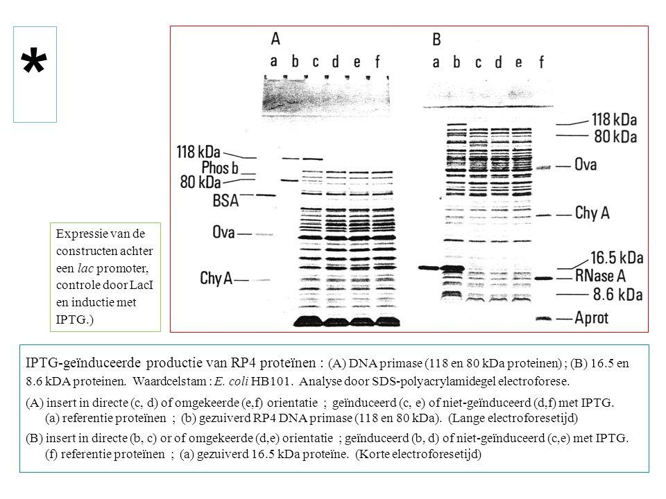 IPTG-geïnduceerde productie van RP4 proteïnen : (A) DNA primase (118 en 80 kDa proteinen) ; (B) 16.5 en 8.6 kDA proteinen.