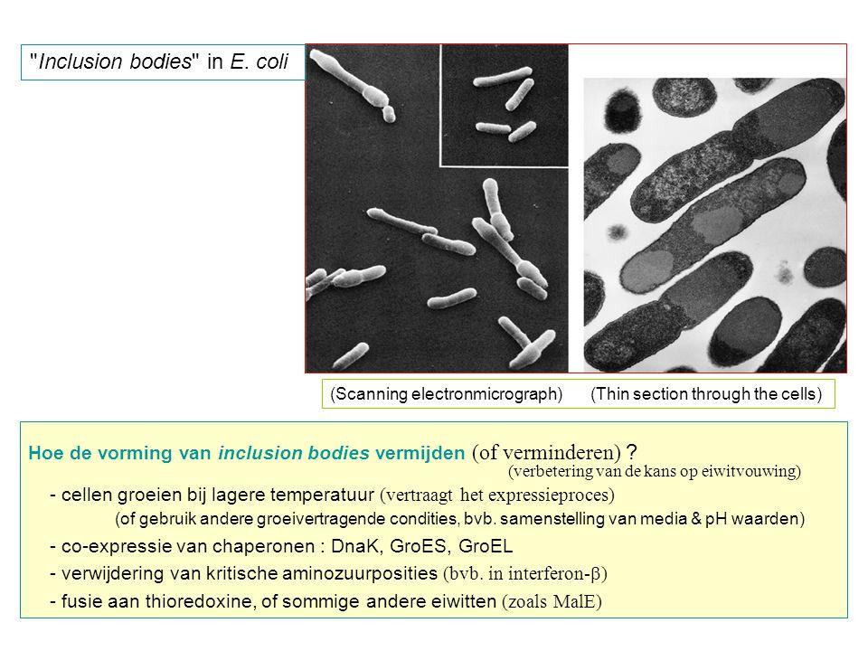 - als fusieproteïne (bvb.
