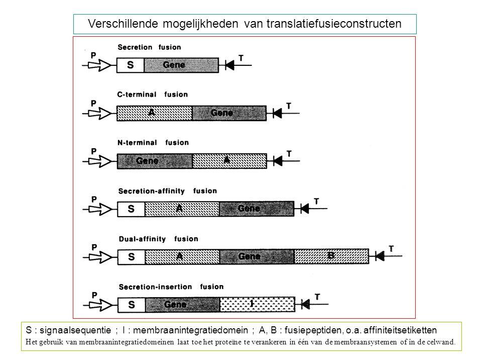 Verschillende mogelijkheden van translatiefusieconstructen S : signaalsequentie ; I : membraanintegratiedomein ; A, B : fusiepeptiden, o.a. affiniteit