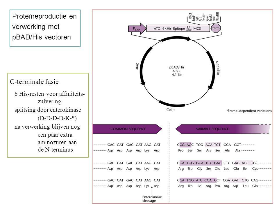 Proteïneproductie en verwerking met pBAD/His vectoren C-terminale fusie 6 His-resten voor affiniteits- zuivering splitsing door enterokinase (D-D-D-D-