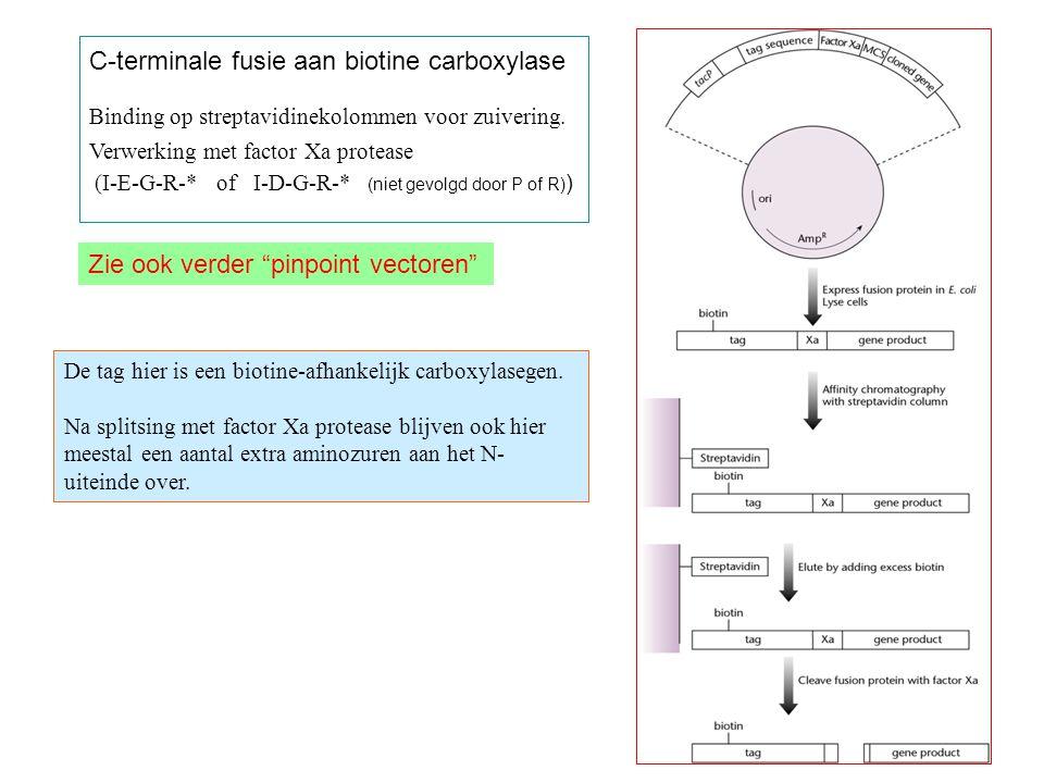 C-terminale fusie aan biotine carboxylase Binding op streptavidinekolommen voor zuivering.