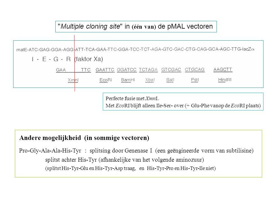 Multiple cloning site in (één van) de pMAL vectoren Andere mogelijkheid (in sommige vectoren) Pro-Gly-Ala-Ala-His-Tyr : splitsing door Genenase I (een geëngineerde vorm van subtilisine) splitst achter His-Tyr (afhankelijke van het volgende aminozuur) (splitst His-Tyr-Glu en His-Tyr-Asp traag, en His-Tyr-Pro en His-Tyr-Ile niet) Perfecte fusie met XmnI.