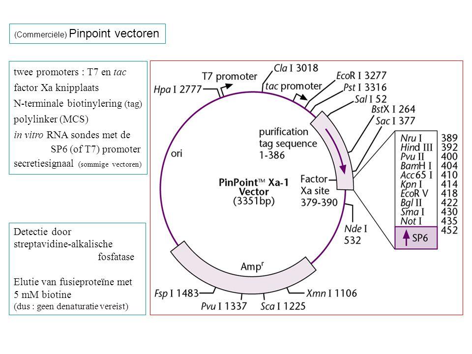 (Commerciële) Pinpoint vectoren twee promoters : T7 en tac factor Xa knipplaats N-terminale biotinylering (tag) polylinker (MCS) in vitro RNA sondes m