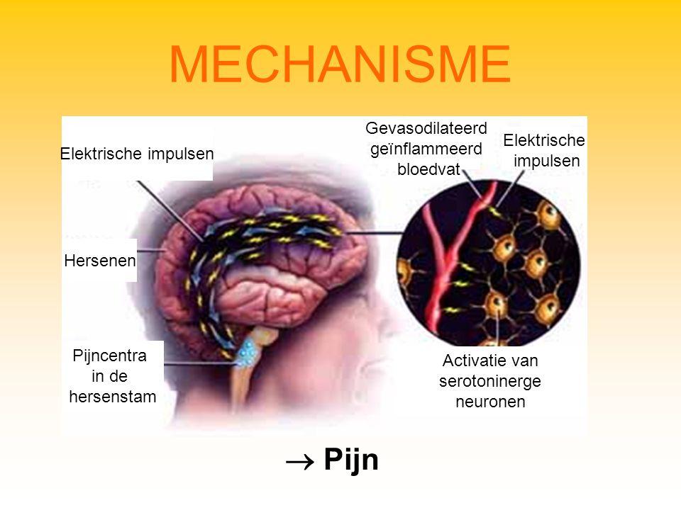 MECHANISME Elektrische impulsen Hersenen Pijncentra in de hersenstam Gevasodilateerd geïnflammeerd bloedvat Elektrische impulsen Activatie van serotoninerge neuronen  Pijn