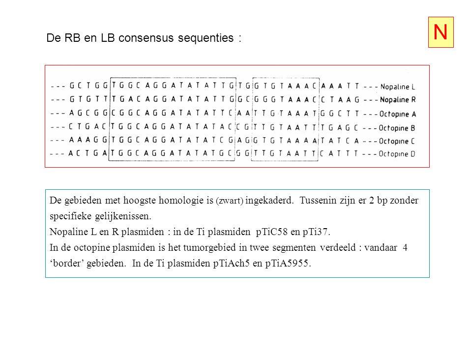 De RB en LB consensus sequenties : De gebieden met hoogste homologie is (zwart) ingekaderd. Tussenin zijn er 2 bp zonder specifieke gelijkenissen. Nop