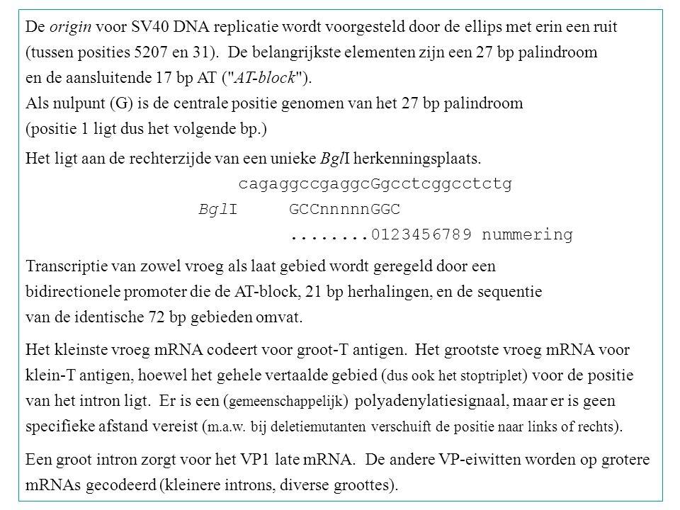 De origin voor SV40 DNA replicatie wordt voorgesteld door de ellips met erin een ruit (tussen posities 5207 en 31). De belangrijkste elementen zijn ee