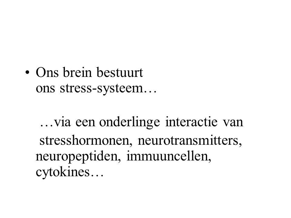 Ons brein bestuurt ons stress-systeem… …via een onderlinge interactie van stresshormonen, neurotransmitters, neuropeptiden, immuuncellen, cytokines…