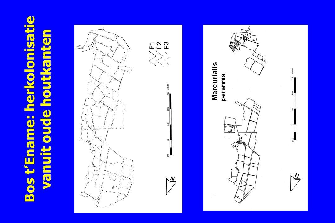 Bos t'Ename: herkolonisatie vanuit oude houtkanten Mercurialis perennis