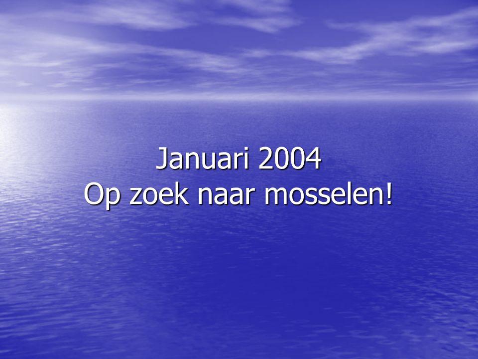 Januari 2004 Op zoek naar mosselen!