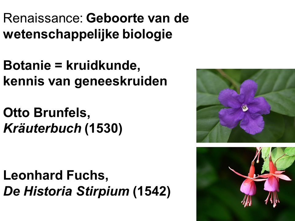 Renaissance: Geboorte van de wetenschappelijke biologie Botanie = kruidkunde, kennis van geneeskruiden Otto Brunfels, Kräuterbuch (1530) Leonhard Fuchs, De Historia Stirpium (1542)