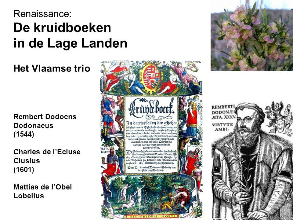 Renaissance: De kruidboeken in de Lage Landen Het Vlaamse trio Rembert Dodoens Dodonaeus (1544) Charles de l'Ecluse Clusius (1601) Mattias de l'Obel Lobelius