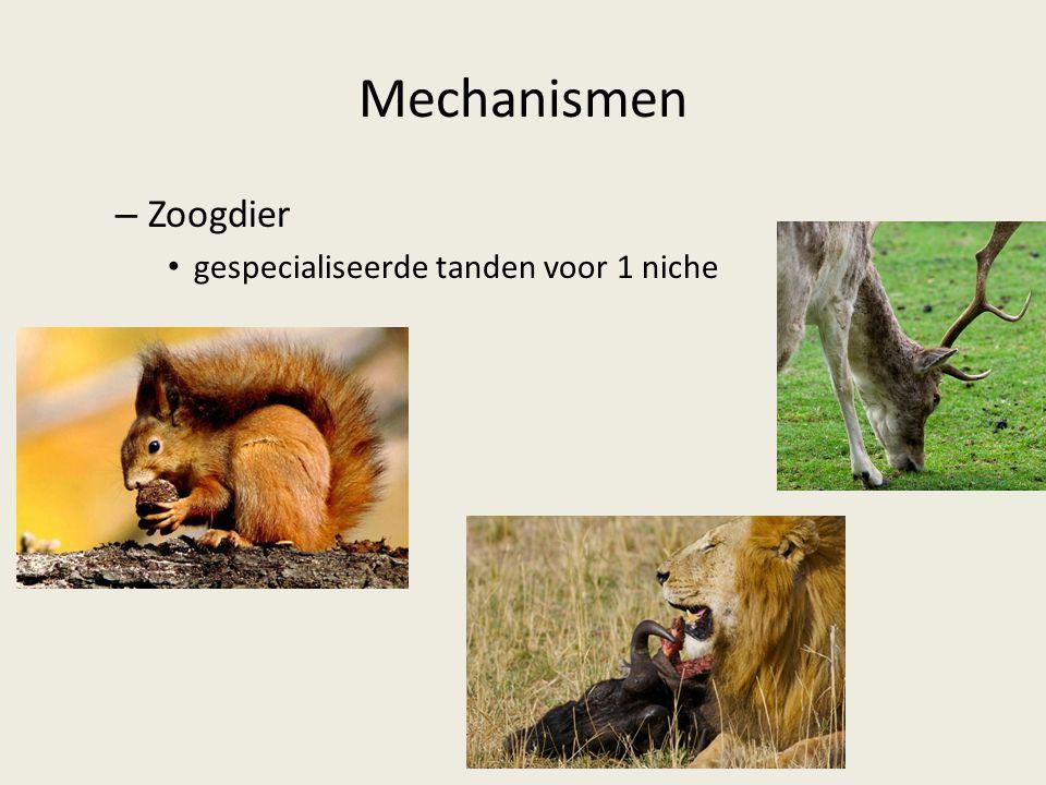 Mechanismen – Zoogdier gespecialiseerde tanden voor 1 niche