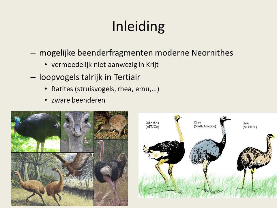 Inleiding – mogelijke beenderfragmenten moderne Neornithes vermoedelijk niet aanwezig in Krijt – loopvogels talrijk in Tertiair Ratites (struisvogels, rhea, emu,…) zware beenderen