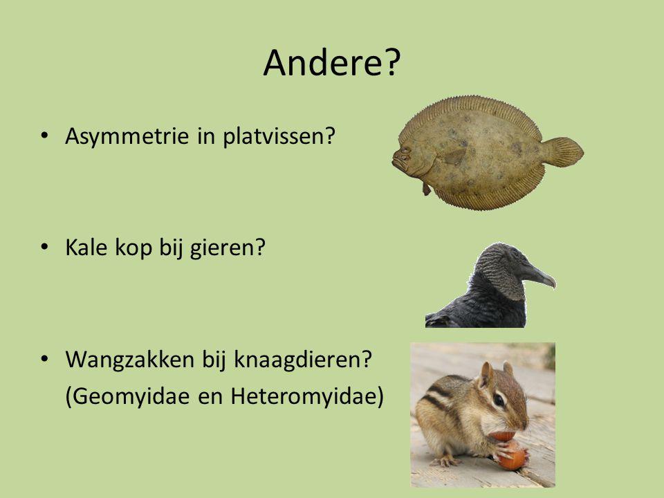 Andere? Asymmetrie in platvissen? Kale kop bij gieren? Wangzakken bij knaagdieren? (Geomyidae en Heteromyidae)