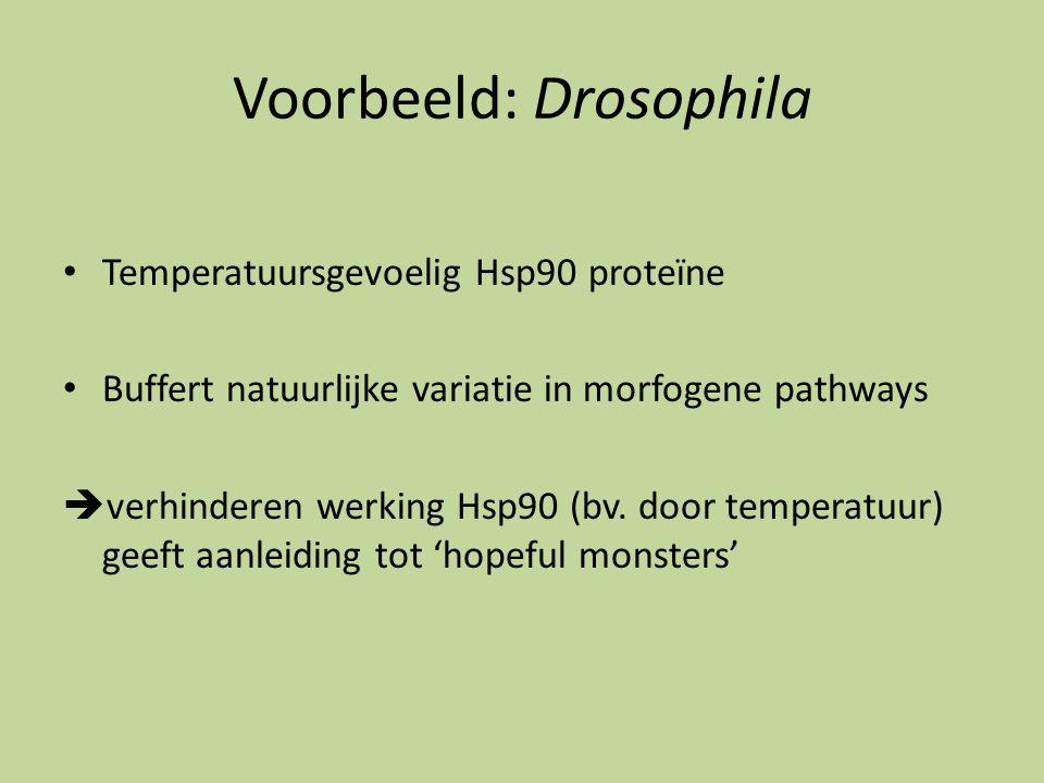 Voorbeeld: Drosophila Temperatuursgevoelig Hsp90 proteïne Buffert natuurlijke variatie in morfogene pathways  verhinderen werking Hsp90 (bv. door tem