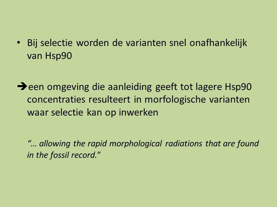 Bij selectie worden de varianten snel onafhankelijk van Hsp90  een omgeving die aanleiding geeft tot lagere Hsp90 concentraties resulteert in morfologische varianten waar selectie kan op inwerken … allowing the rapid morphological radiations that are found in the fossil record.