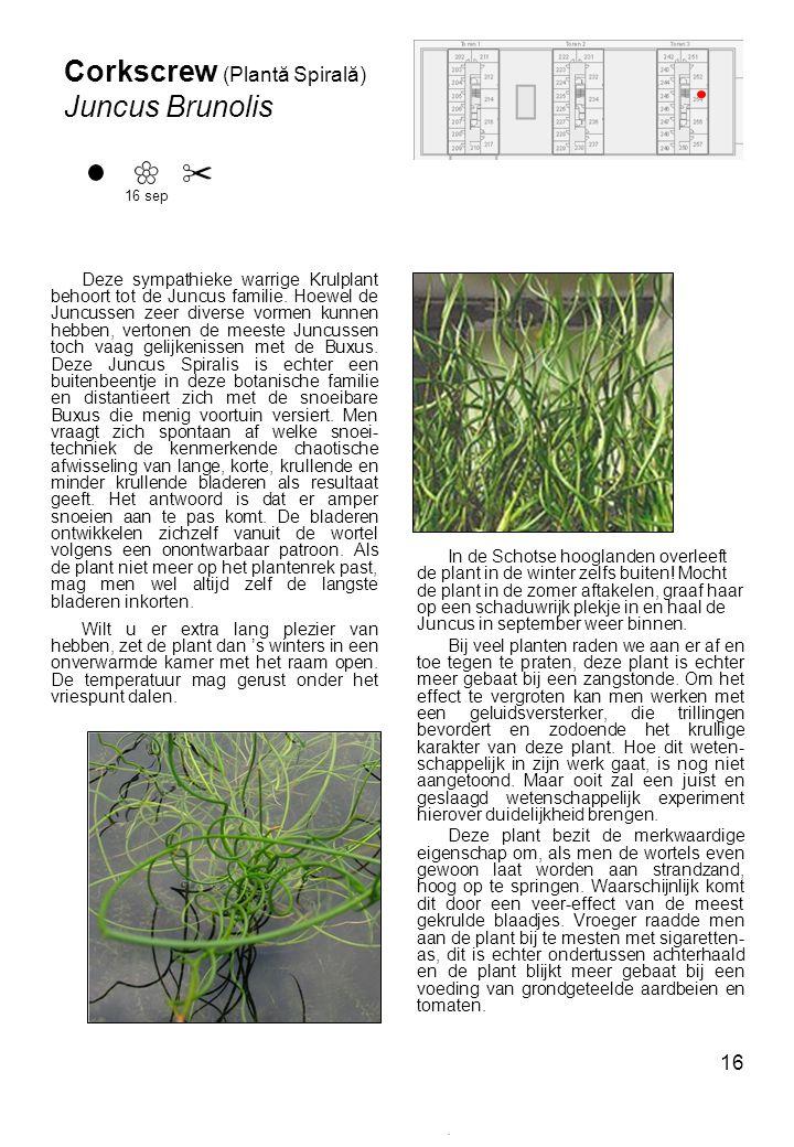 16 In de Schotse hooglanden overleeft de plant in de winter zelfs buiten.