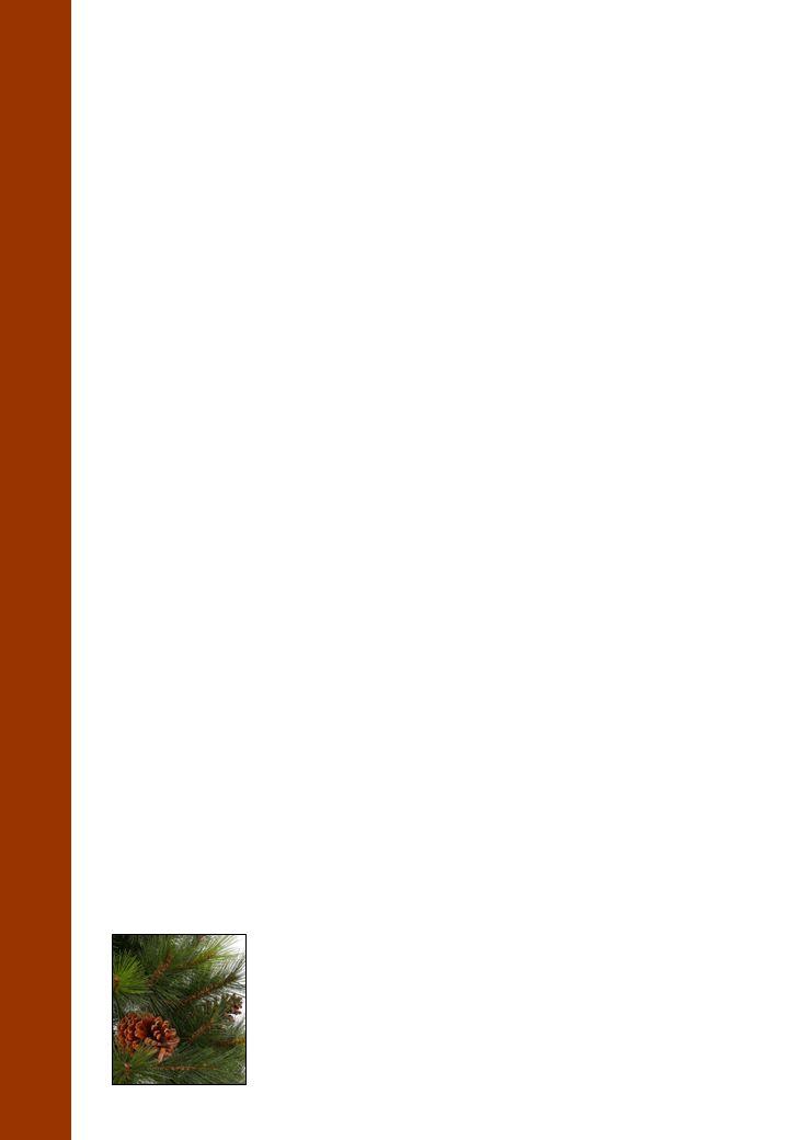 18 Dennenboom Tompinus Tomestris De Tompinus Tomestris behoort tot de familie van de Tomaceae en is de meest honkvaste soort van allemaal.