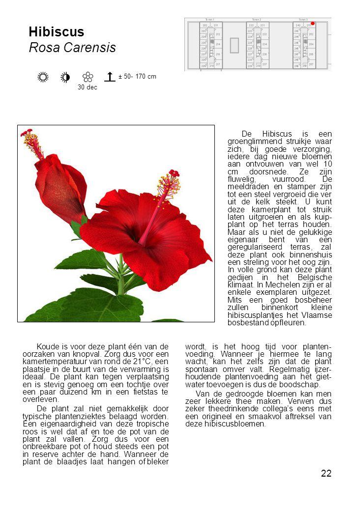 22 Koude is voor deze plant één van de oorzaken van knopval.