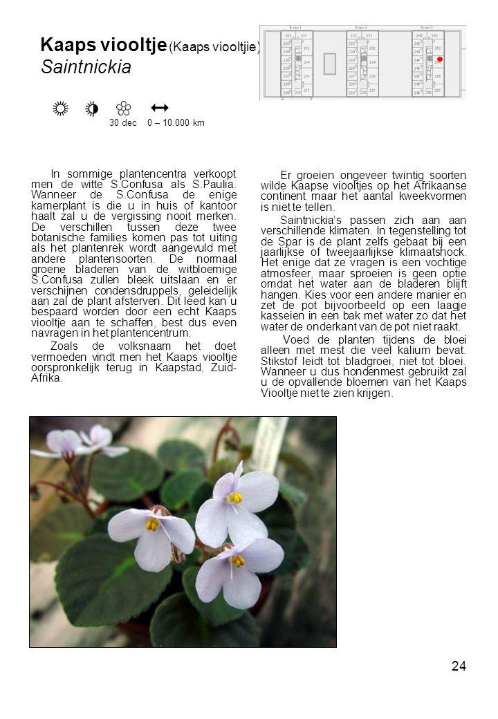 24 Er groeien ongeveer twintig soorten wilde Kaapse viooltjes op het Afrikaanse continent maar het aantal kweekvormen is niet te tellen.