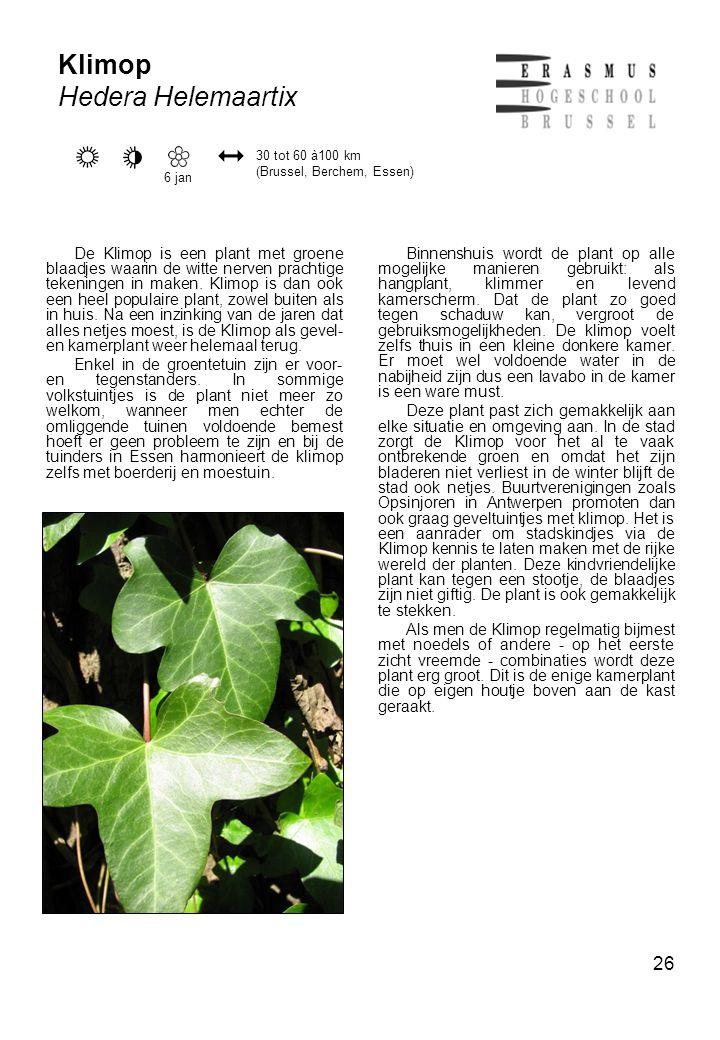 26 Klimop Hedera Helemaartix De Klimop is een plant met groene blaadjes waarin de witte nerven prachtige tekeningen in maken.