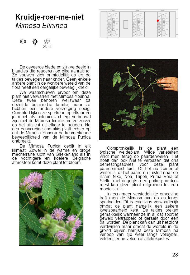28 Kruidje-roer-me-niet Mimosa Elininea De geveerde bladeren zijn verdeeld in blaadjes die reageren op elke aanraking.