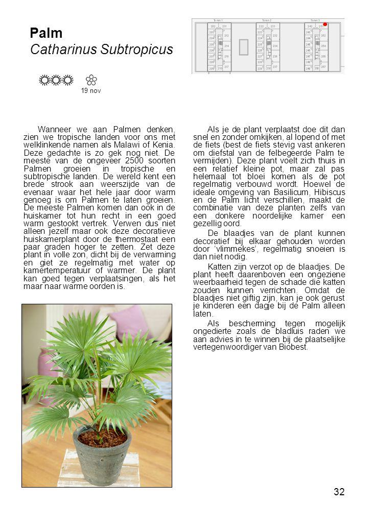 32 Palm Catharinus Subtropicus 19 nov Wanneer we aan Palmen denken, zien we tropische landen voor ons met welklinkende namen als Malawi of Kenia.