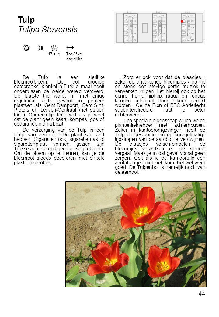 44 De Tulp is een sierlijke bloembolbloem.