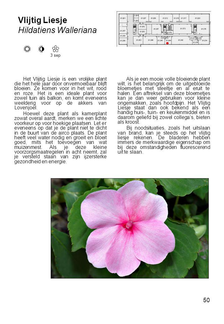 50 Vlijtig Liesje Hildatiens Walleriana Het Vlijtig Liesje is een vrolijke plant die het hele jaar door onvermoeibaar blijft bloeien.