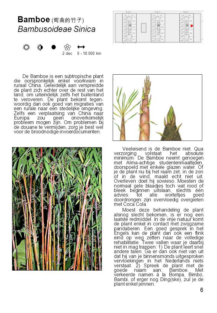 6 De Bamboe is een subtropische plant die oorspronkelijk enkel voorkwam in ruraal China.