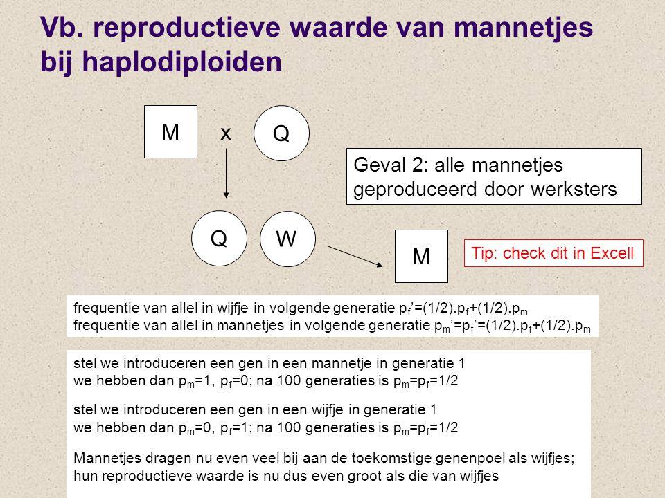 Vb. reproductieve waarde van mannetjes bij haplodiploiden M Q x frequentie van allel in wijfje in volgende generatie p f '=(1/2).p f +(1/2).p m freque