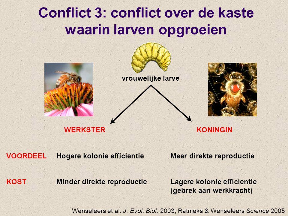Conflict 3: conflict over de kaste waarin larven opgroeien KONINGIN Meer direkte reproductie Lagere kolonie efficientie (gebrek aan werkkracht) WERKSTER Hogere kolonie efficientie Minder direkte reproductie VOORDEEL KOST Wenseleers et al.