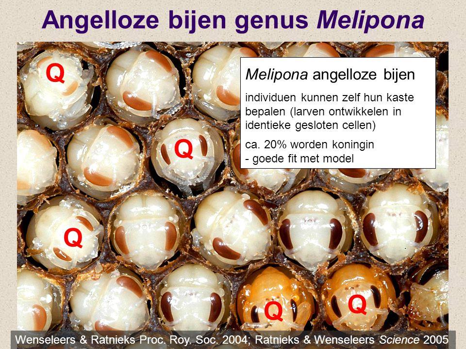 Q Q Q Q Q Angelloze bijen genus Melipona Wenseleers & Ratnieks Proc. Roy. Soc. 2004; Ratnieks & Wenseleers Science 2005 Melipona angelloze bijen indiv