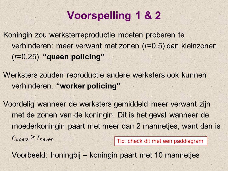 Voorspelling 1 & 2 Koningin zou werksterreproductie moeten proberen te verhinderen: meer verwant met zonen (r=0.5) dan kleinzonen (r=0.25) queen policing Werksters zouden reproductie andere werksters ook kunnen verhinderen.