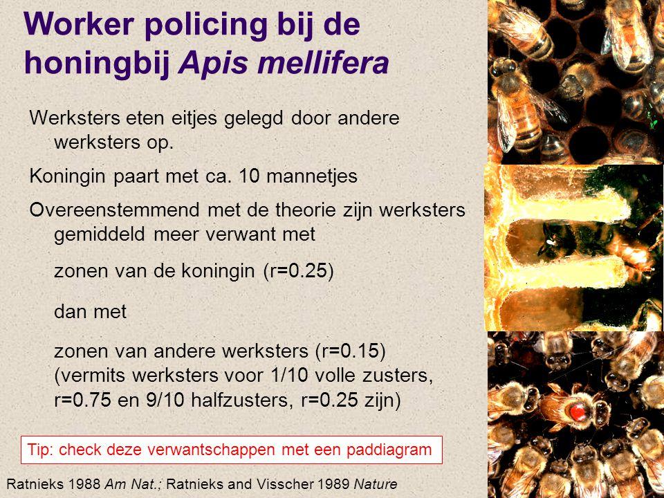 Worker policing bij de honingbij Apis mellifera Werksters eten eitjes gelegd door andere werksters op. Koningin paart met ca. 10 mannetjes Overeenstem