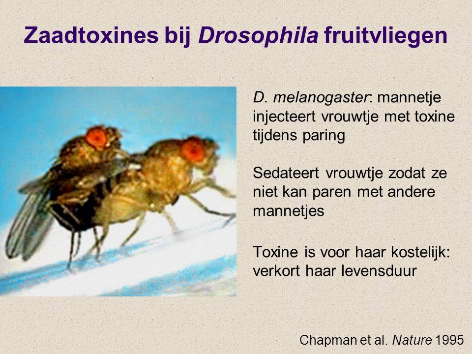 Zaadtoxines bij Drosophila fruitvliegen D. melanogaster: mannetje injecteert vrouwtje met toxine tijdens paring Sedateert vrouwtje zodat ze niet kan p