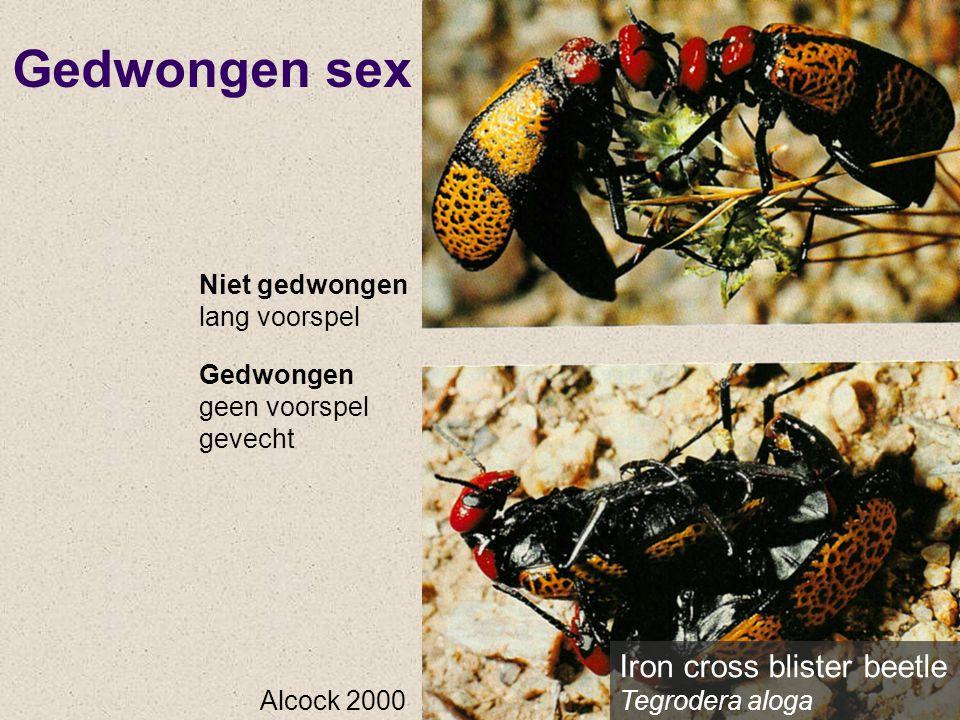 Gedwongen sex Iron cross blister beetle Tegrodera aloga Alcock 2000 Niet gedwongen lang voorspel Gedwongen geen voorspel gevecht