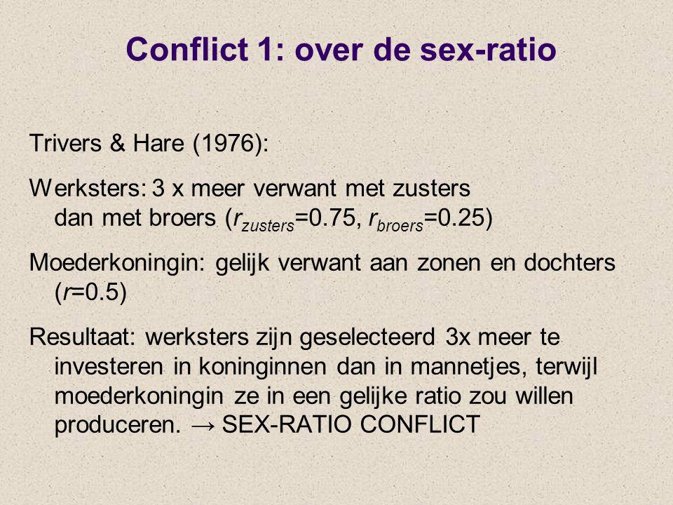 Conflict 1: over de sex-ratio Trivers & Hare (1976): Werksters: 3 x meer verwant met zusters dan met broers (r zusters =0.75, r broers =0.25) Moederkoningin: gelijk verwant aan zonen en dochters (r=0.5) Resultaat: werksters zijn geselecteerd 3x meer te investeren in koninginnen dan in mannetjes, terwijl moederkoningin ze in een gelijke ratio zou willen produceren.