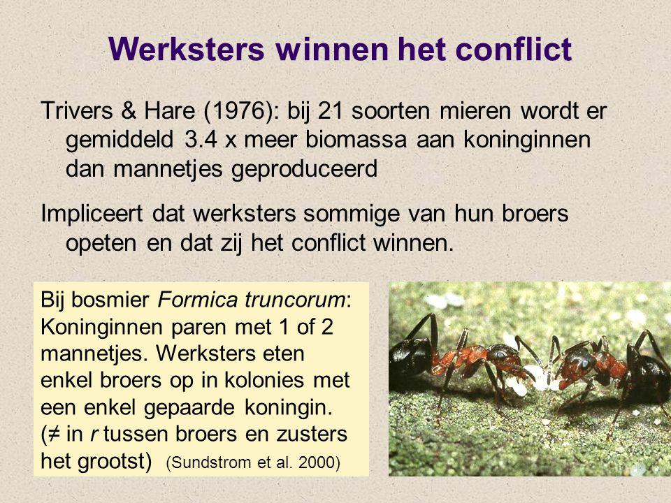 Werksters winnen het conflict Trivers & Hare (1976): bij 21 soorten mieren wordt er gemiddeld 3.4 x meer biomassa aan koninginnen dan mannetjes geproduceerd Impliceert dat werksters sommige van hun broers opeten en dat zij het conflict winnen.