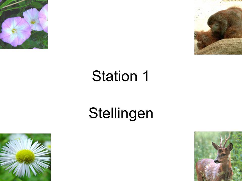Station 1 Stellingen