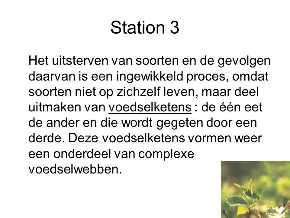 Station 3 Het uitsterven van soorten en de gevolgen daarvan is een ingewikkeld proces, omdat soorten niet op zichzelf leven, maar deel uitmaken van voedselketens : de één eet de ander en die wordt gegeten door een derde.