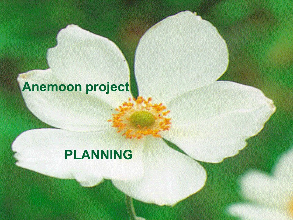 Anemoon project PLANNING