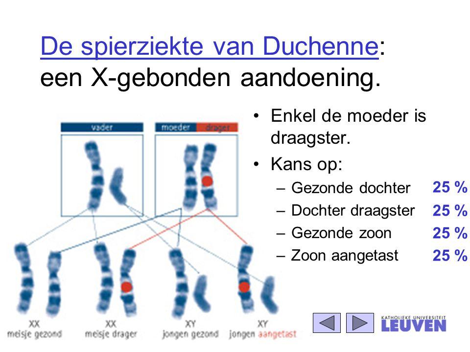De spierziekte van Duchenne: een X-gebonden aandoening. Enkel de moeder is draagster. Kans op: –Gezonde dochter –Dochter draagster –Gezonde zoon –Zoon